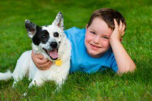 Hundlyftet problemhund kurs problemhundskonsult örebro hundkurs