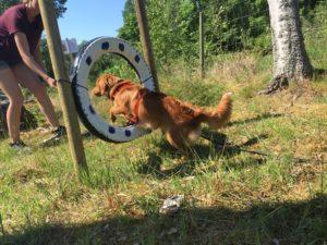 problemhund, upplevelsebana, hundlyftet, hundpsykolog